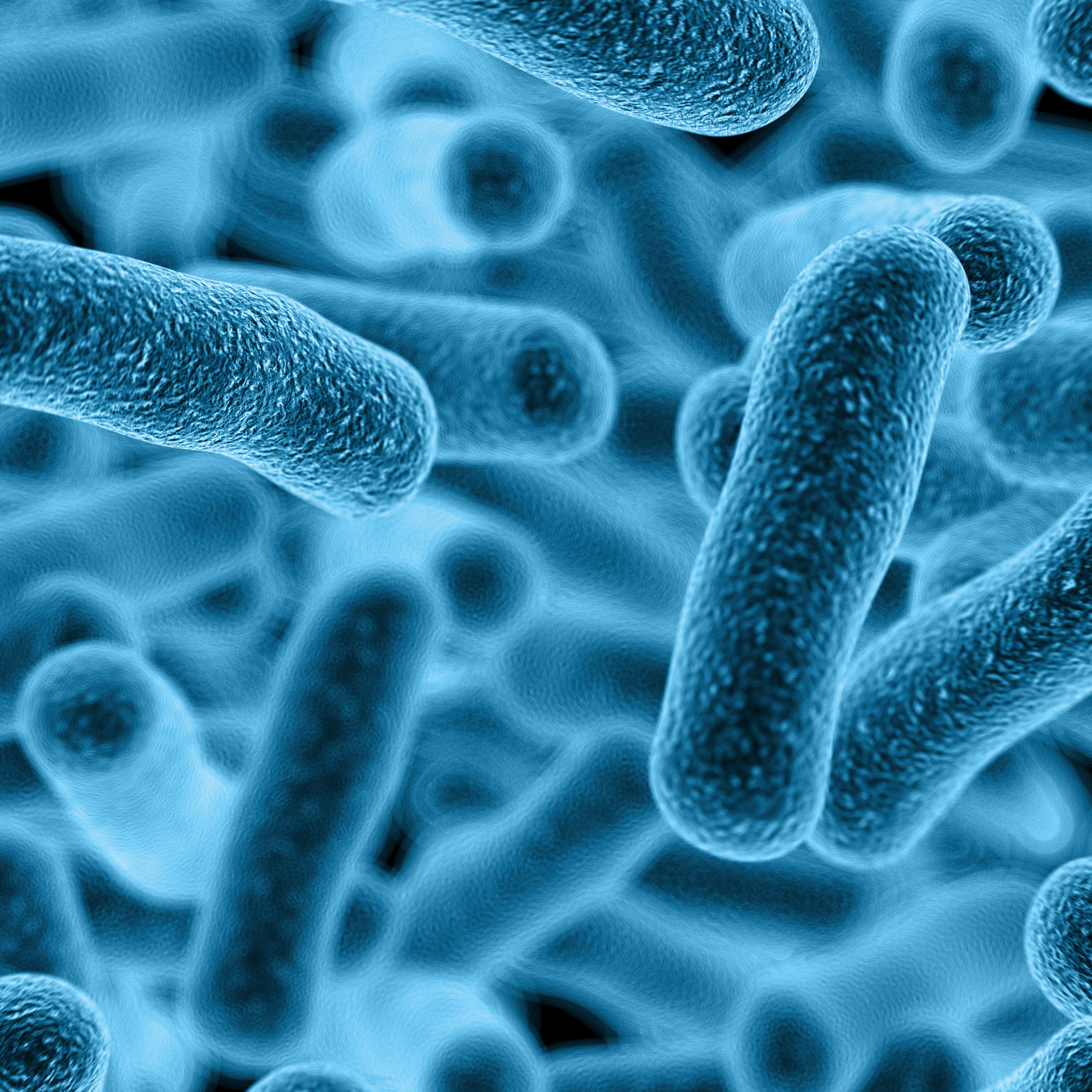 biocompatibility study of lactobacillus casei In this study, 15 lactobacillus isolates were found to produce biosurfactants in the mid-exponential and stationary growth phases the stationary-phase biosurfactants from lactobacillus.